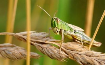 À  Madagascar, réchauffement climatique, famine, Covid-19 font des ravages …
